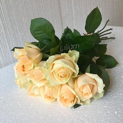 Розы кремовые российские