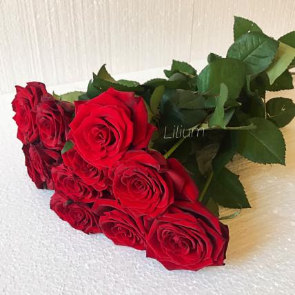 Розы красные российские